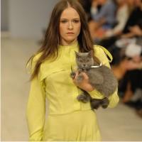 Надя Дзяк, модные дизайнеры